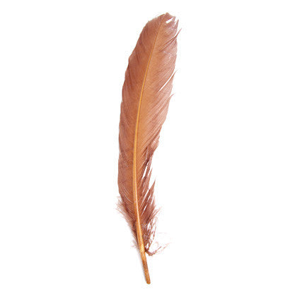 6pcs Turkey Quills - Brown