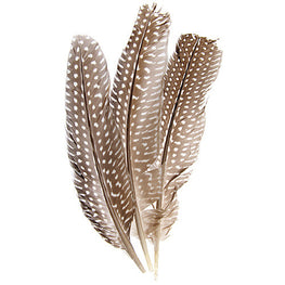 10pcs Guinea Fowl Quills - Natural