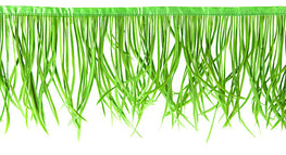 22in Biot Feather Trim - Green