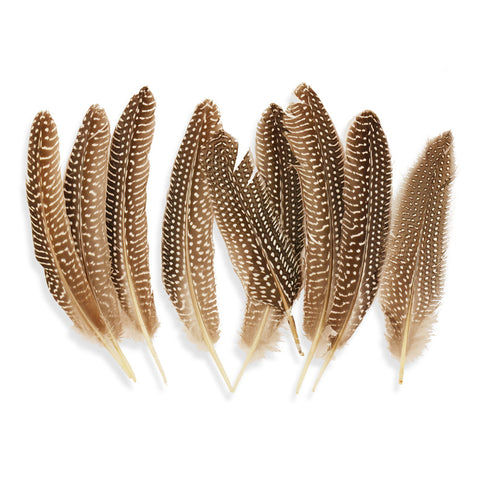 10pcs Guinea Quill Wing Feathers with in Natural Brown (4-6 inches)