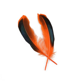 10pcs Mallard Duck Wing Feathers - Orange (3-5 inches)