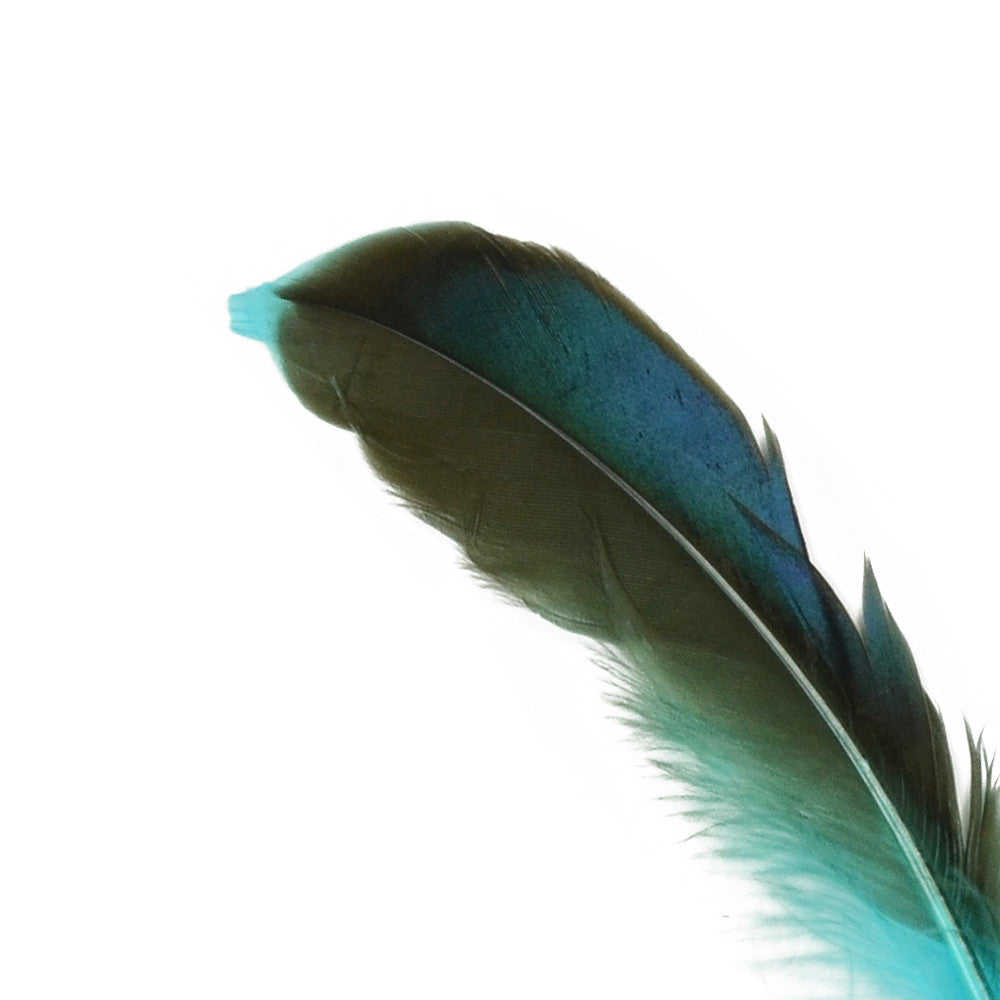 10pcs Mallard Duck Wing Feathers - Turquoise (3-5 inches)