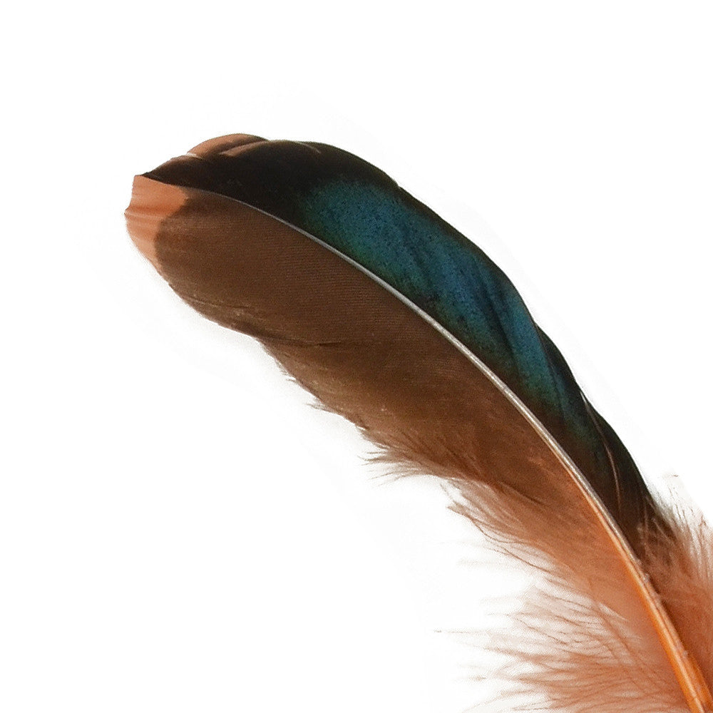 10pcs Mallard Duck Wing Feathers - Brown (3-5 inches)