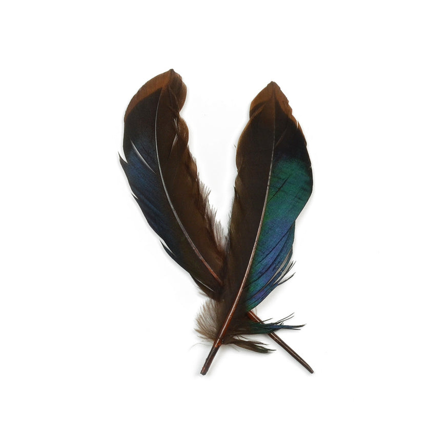 10pcs Mallard Duck Wing Feathers - Dark Brown (3-5 inches)