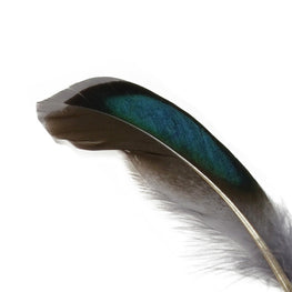 10pcs Mallard Duck Wing Feathers - Grey (3-5 inches)