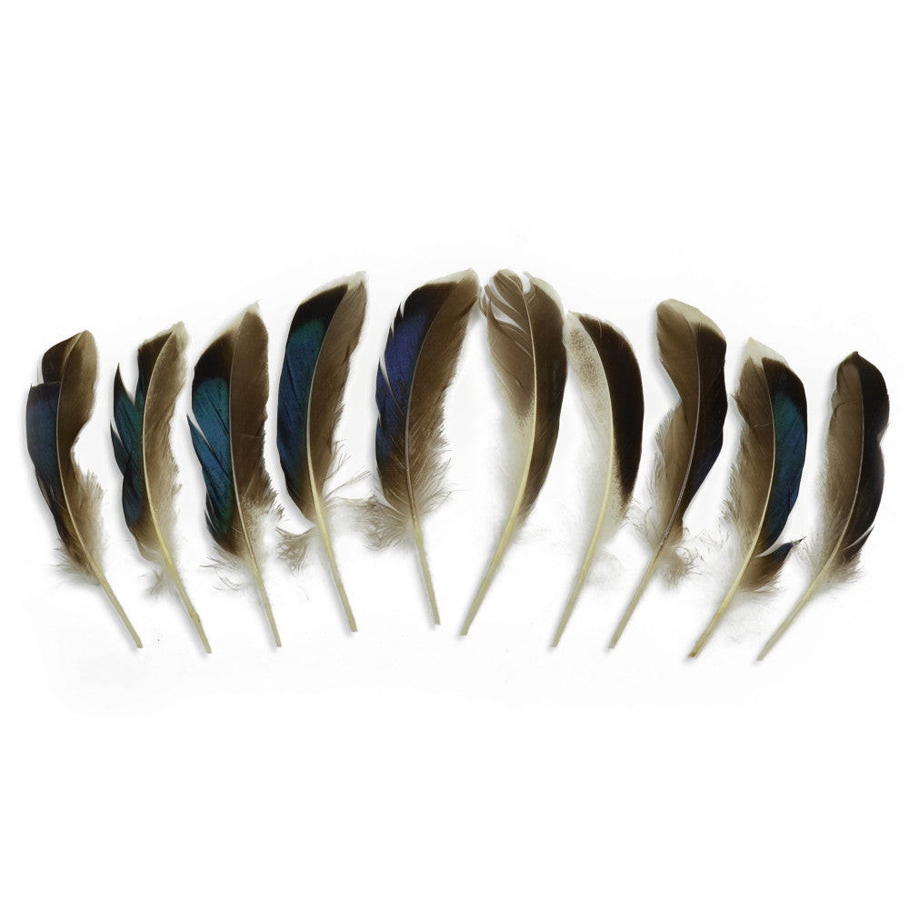 10pcs Mallard Duck Wing Feathers - Natural (3-5 inches)