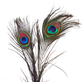 Dyed Peacock Feathers - Blue