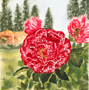 A Two Color Rose - Original Watercolor Painting