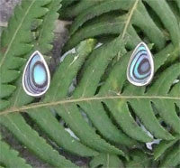Paua Tear Drop Stud Earrings