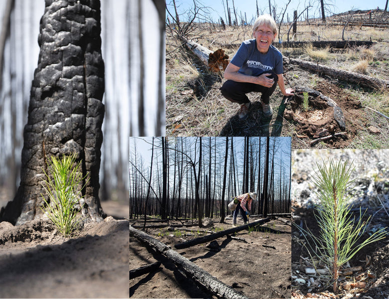 Tree Updates: 3 New BC Planting Sites + 1000 Trees Planted