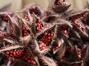 Organic Annatto Seed, 9 Incredible Benefits Of Annatto (Atsuete)