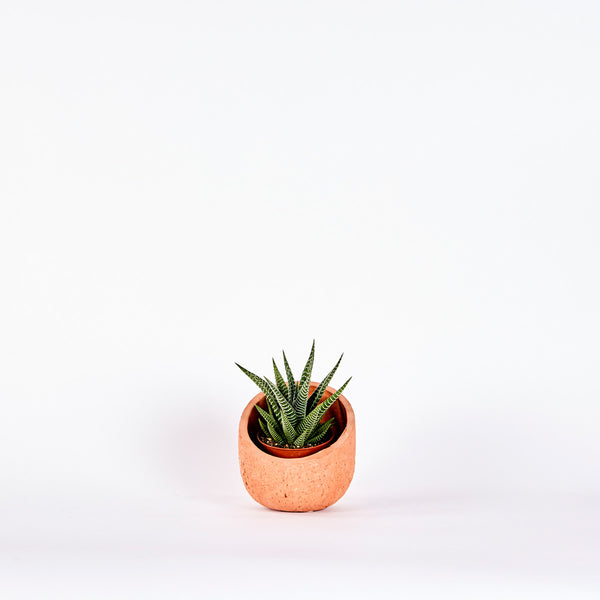Pipe Planter — Small
