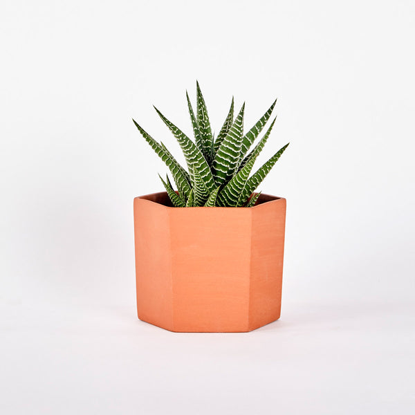 Terracotta HEX Planter Blank