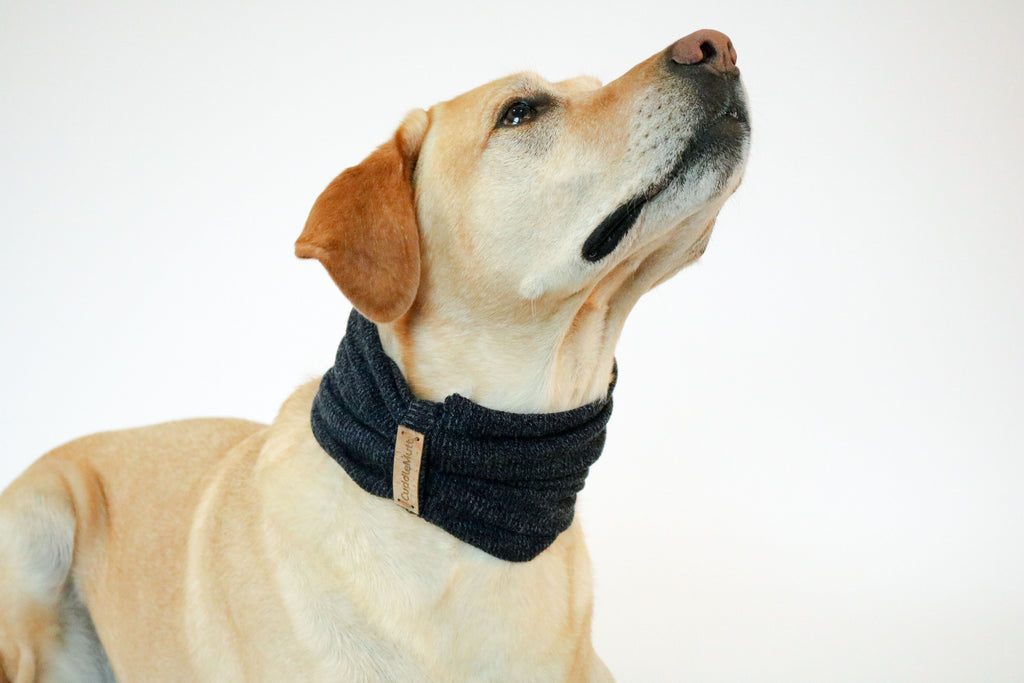 Navy Dog Scarf