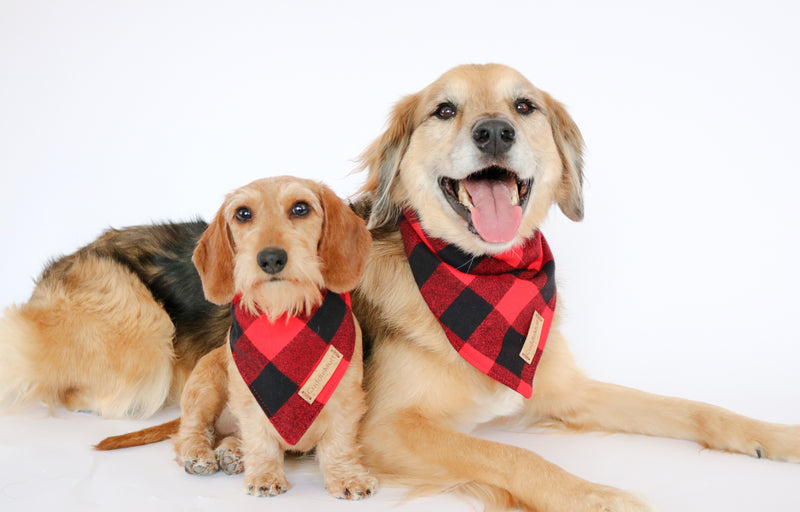 Bandana I Red Buffalo Plaid