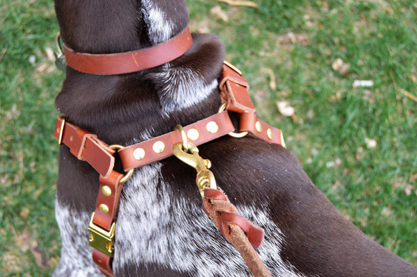 Argos Gear Connected Control Dog Harness - Harness - Argos Dog Gear - Made in the USA - Guaranteed for Life - Ready for Every Adventure - Copyright all rights reserved