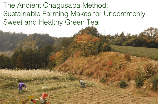 The Ancient Chagusaba Method: Sustainable Farming Makes for Uncommonly Sweet and Healthy Green Tea