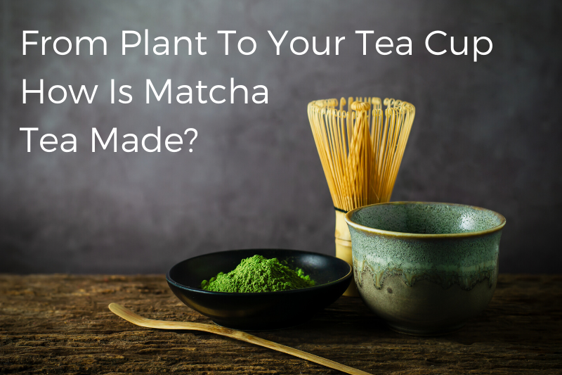 From Plant To Your Tea Cup How Is Matcha Tea Made?