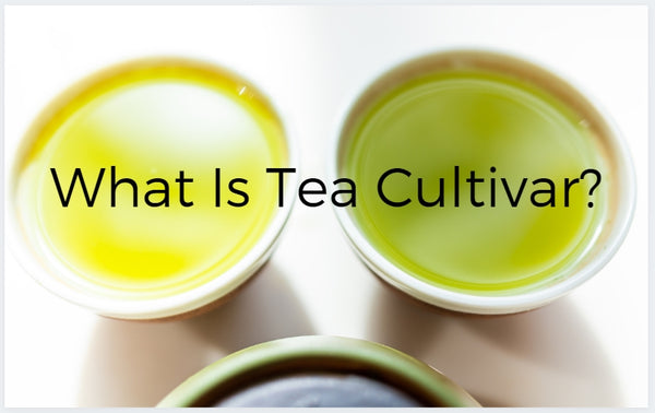 What is Tea Cultivar?