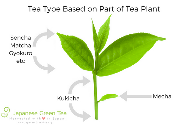 Different Tea Type Based on Part of Tea Leaf