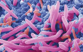 Is the microbiome the real challenge with corona virus infections?