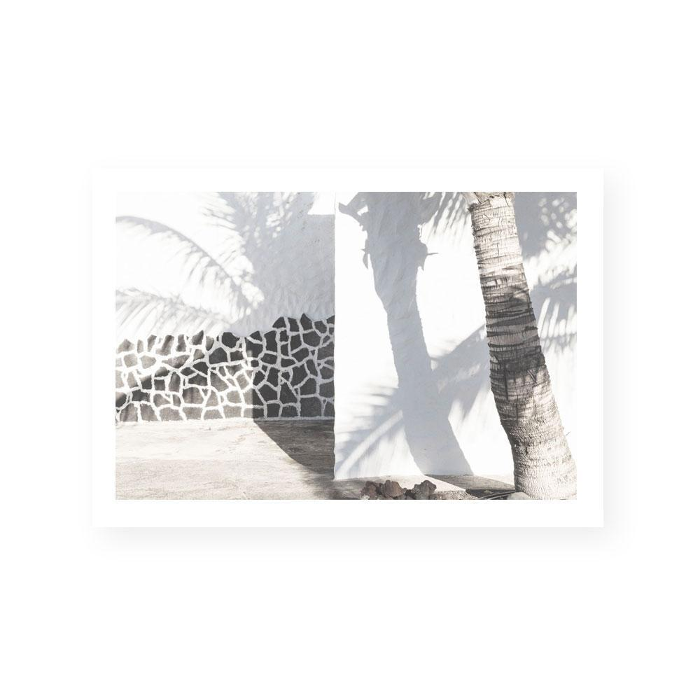 Palm Shadows Print