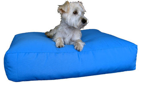 dash the dog on a medium pet bed in teal