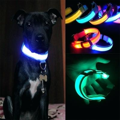 LED Rechargeable Collars