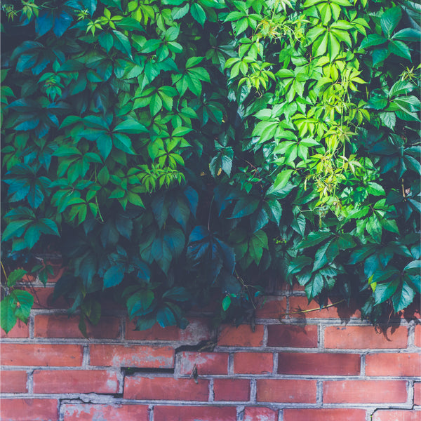 Green Leaves on Brick Wall Photo Backdrop