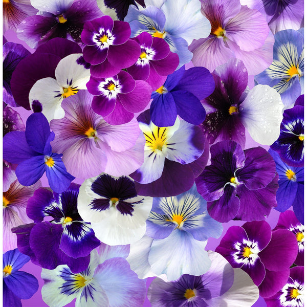 Spring Pansies Photo Backdrop
