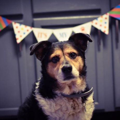 Dog Birthday Banner