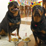 Dog Birthday Cake Crowns