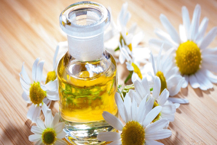 Chamomile Essential Oils For Aromatherapy