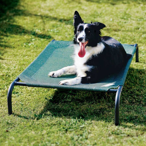 Coolaroo Medium Elevated Pet Bed with Knitted Fabric