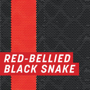 Red-Bellied Black Snake Uncut Sheet
