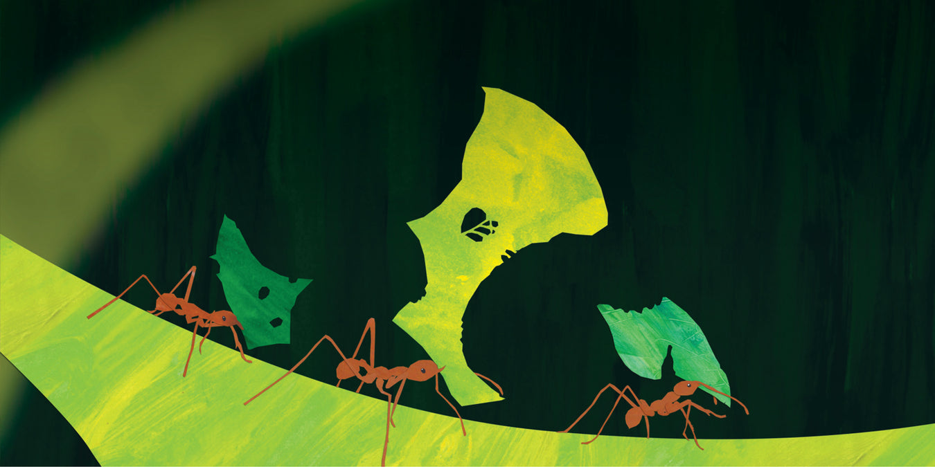 Oz Publishing counting big book banner showing artwork of 3 ants on a leaf
