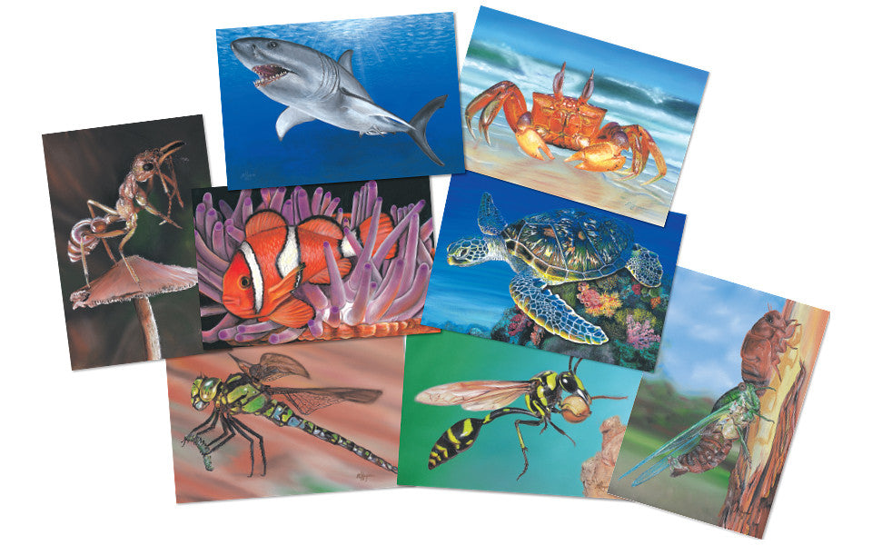 Insect and Sea Creatures Poster Kit
