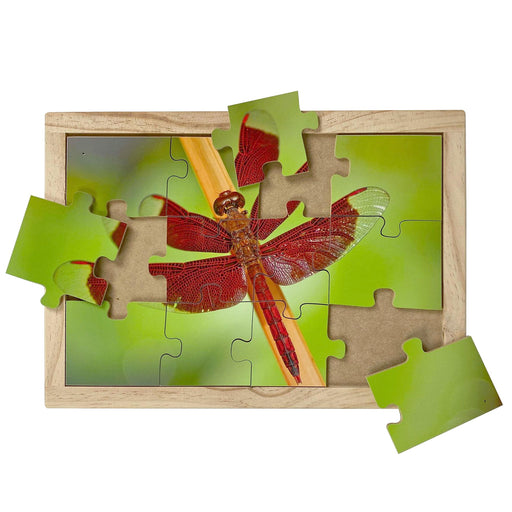 Australian-made wooden puzzle, featuring photograph of a red dragonfly sitting on a reed. Designed for childcare.
