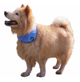 PRE-ORDER: Cooling Bandana for Dogs