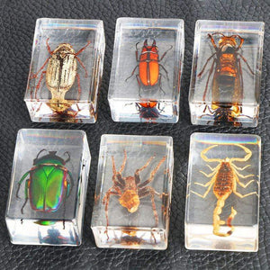 Embedded Insect Collection