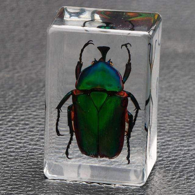 Embedded Insect Collection Emerald Beatle