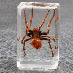 Embedded Insect Collection Tarantula