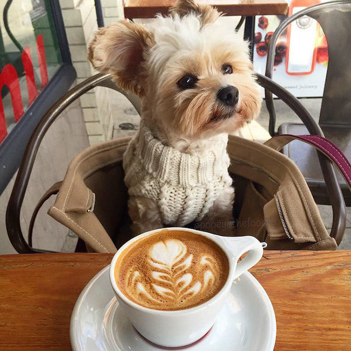 A Turtle Neck Latte Afternoon