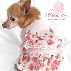 Velveteen Rose Chiffon Ruffled Dog Dress