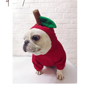 Apple French Bulldog
