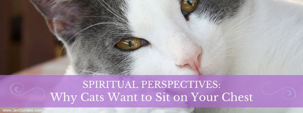 Spiritual Perspectives: Why Cats Want to Sit on Your Chest
