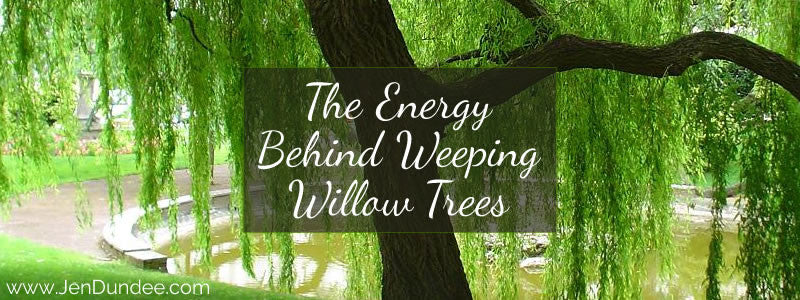 The Energy Behind Weeping Willow Trees
