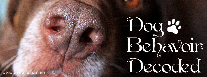 Dog Behavior: Decoded