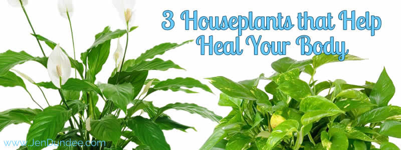 3 Houseplants that Help Heal Your Body