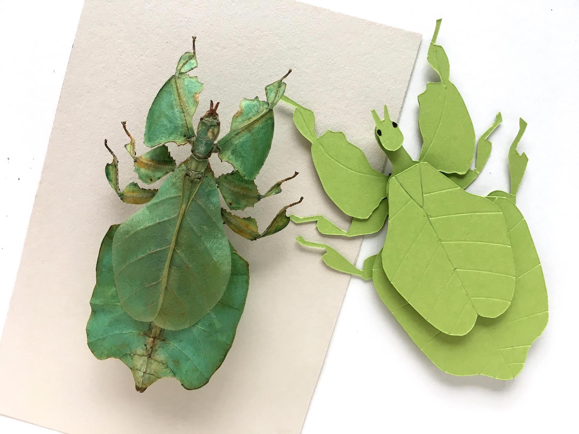 Leaf Insect Paper Sculpture